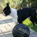 Brin z žogo
