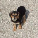 Psiček in psička, stara 2 meseca,  na nove lastnike čakata v azilu Perun, info. na mob. 03