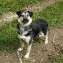 Oddamo prijazno in igrivo psičko, staro 1-2 leti, predstavljena je bila v oddaji TLP, posv