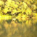 reka drava