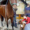 Srecanje s konjem Kingstonom - 30.09.2005