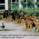 no te pa ka so nej mačke pogumne