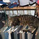 no tau je pa tau kda mačke ne dajo notre spate