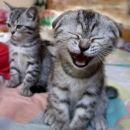 tau je moja mačka kihika tisto polek pa zijika