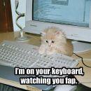 tau je moja mačka ka me pri rač. pazi kaj pišen
